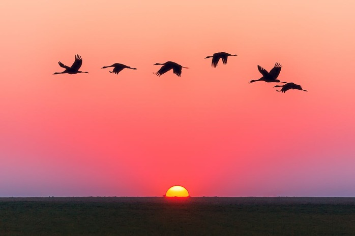 6 birds flying in the pink sky