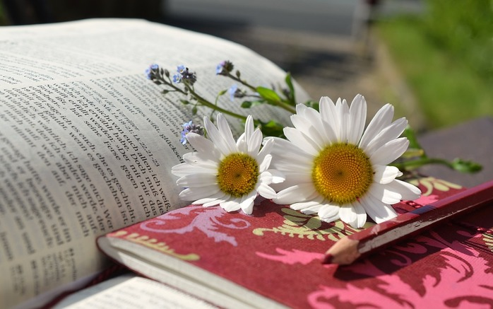 Bible, notebook, pencil, daisies